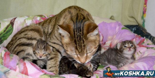 Кошка вылизывает котят