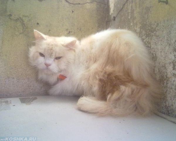 8-ми месячная кошка забилась в углу