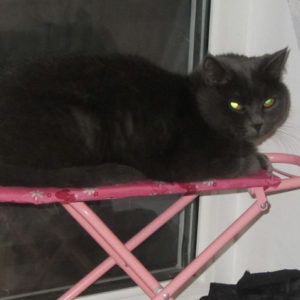 Британская кошка Гайка на детской гладильной доске