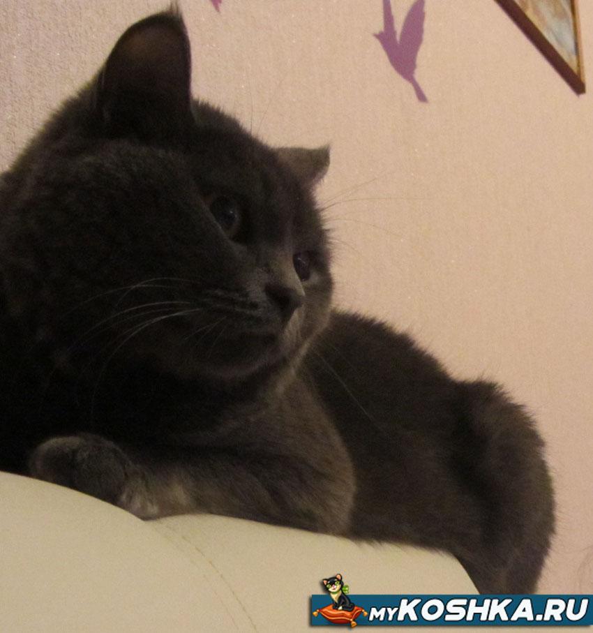 К чему снятся пушистые котята беременной женщине 76