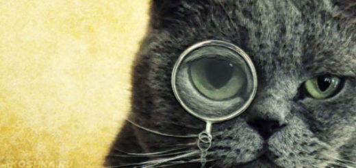 Британский кастрированный кот с моноклем