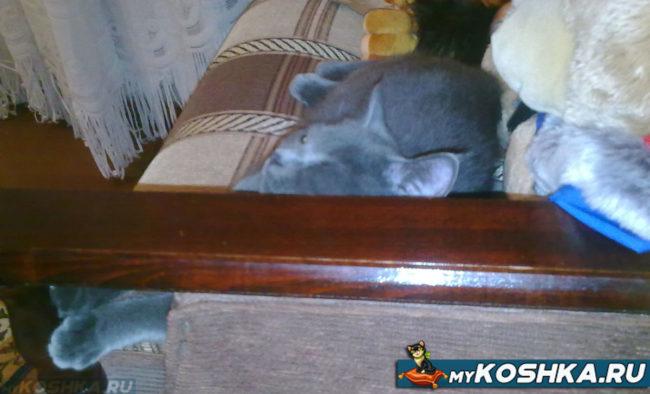 Британская кошка отдыхает вдали от сквозняка