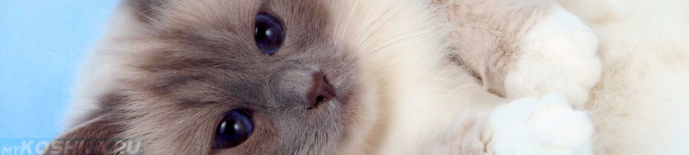 Двухгодовалый не кастрированный кот