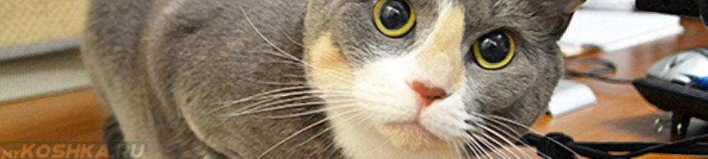 Кастрированный кот мордочка