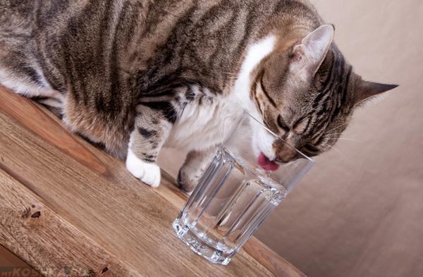 Кошка пьёт из стеклянного стакана воду
