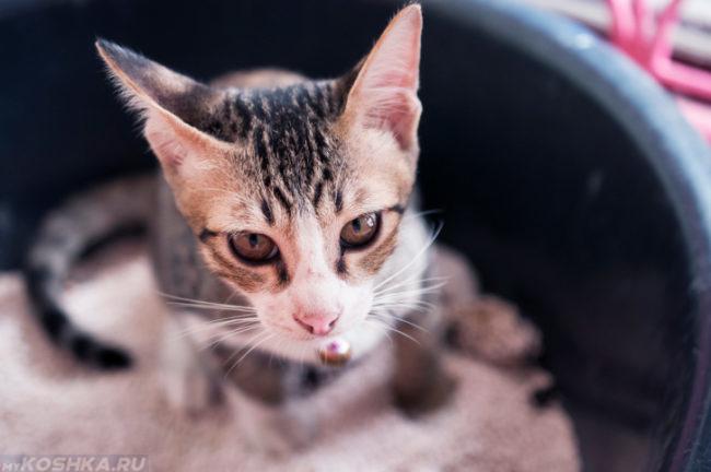 Кошка ходит в туалет в ведро