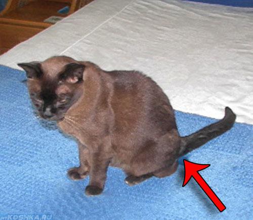 Кот нагадил на кровать