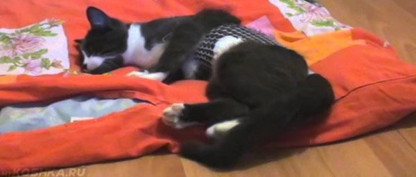 Кот отходит после наркоза лежа на одеяле