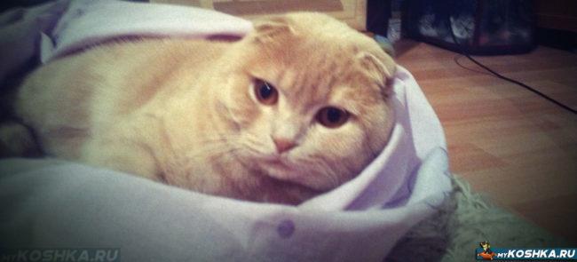Кот после операции отдыхает