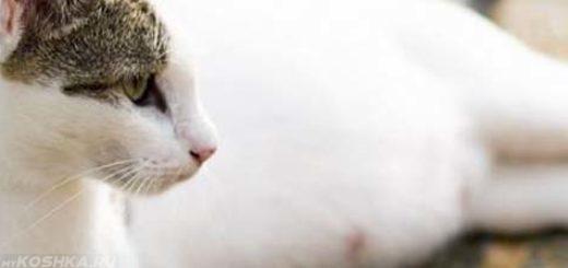 Кошка беременная первый раз набухают соски