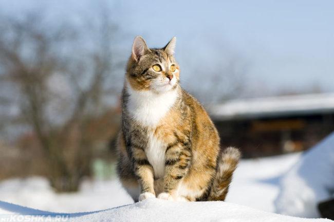 Беременная кошка сидит на заснеженной земле