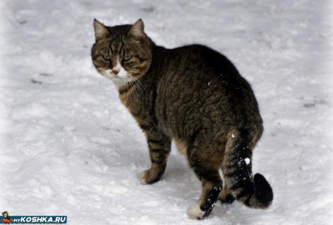 Кастрированный кот убежал во двор