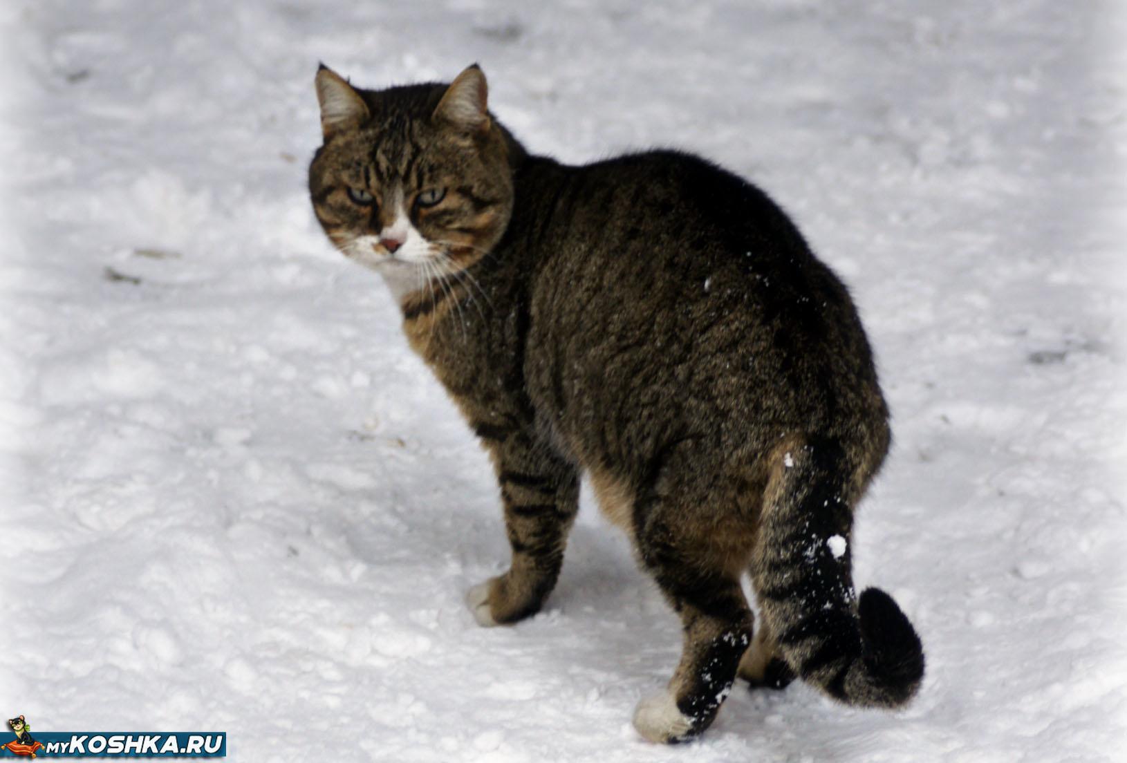 Сколько дней может быть кот дома один