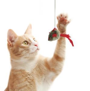 Кот играет с игрушечной мышкой