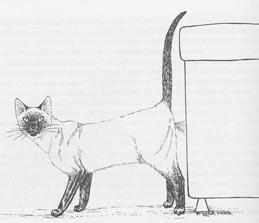 Кот гадит и метит на кресло