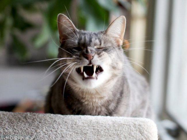 Кошка часто чихает