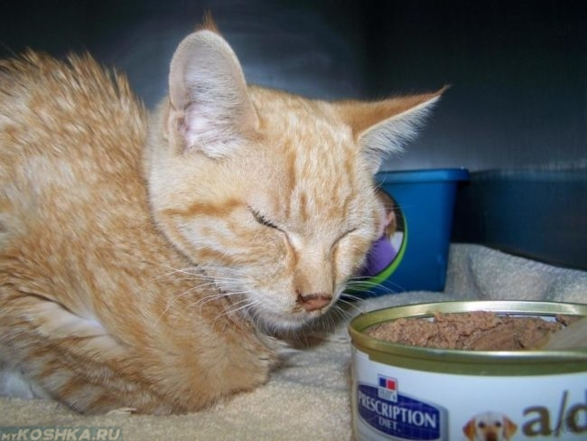 Кошачья чумка симптомы и лечение в домашних условиях