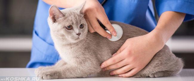 Диагностика ложной беременности у кошки ветеринаром