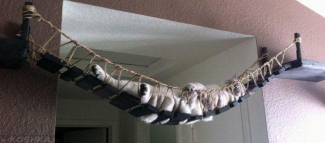 Гамак для домашней кошки сделанный своими руками