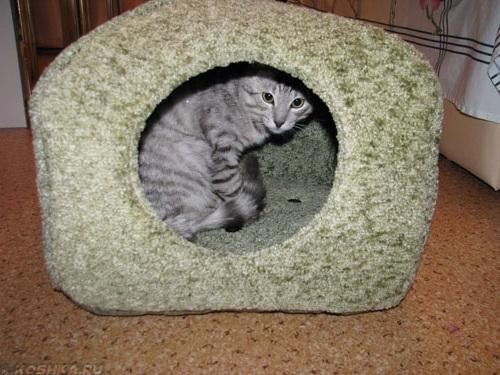 Готовый домик для кошки