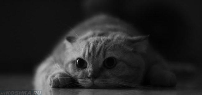 Изолированная кошка во время течки