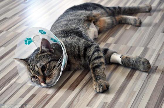 Кастрированный кот после операции лежит в воротнике
