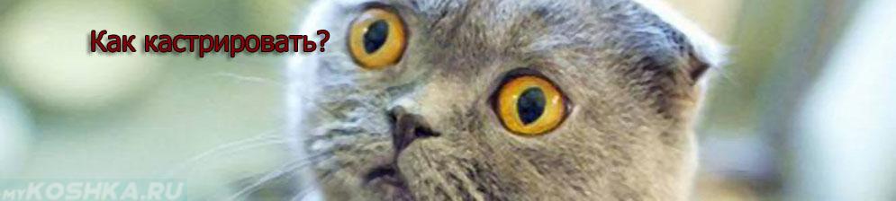 Не кастрированный кот в небольшом недоумении
