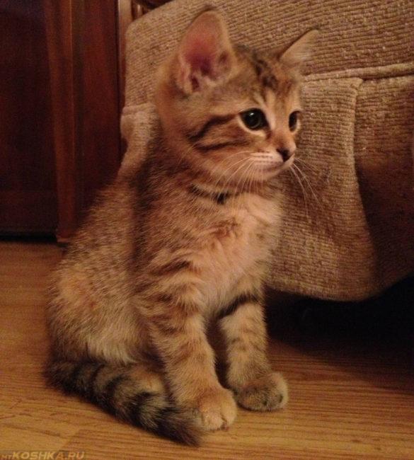 6-ти месячный котёнок