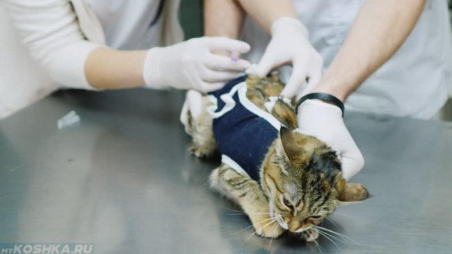 Ставим внутримышечно укол коту своими руками