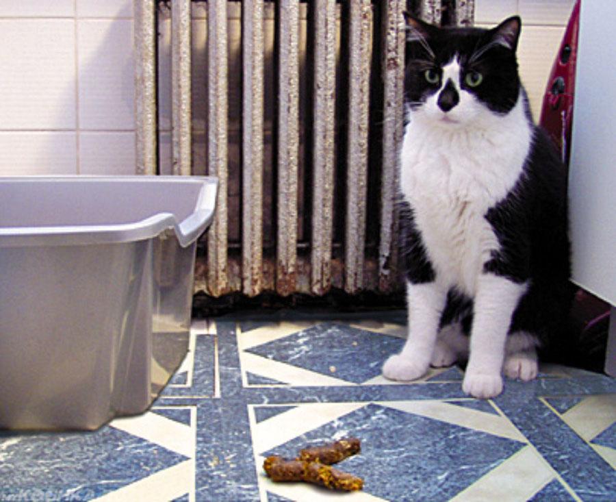 Что делать если кот срет не в лоток
