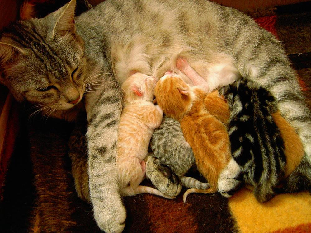 Как успокоить кошку которая просит кота в домашних условиях