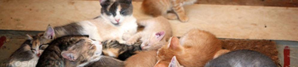 Кошка и её большое потомство