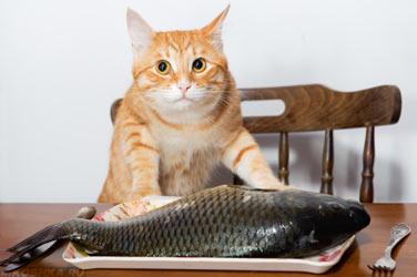 Кошка хочет съесть рыбу в тарелке