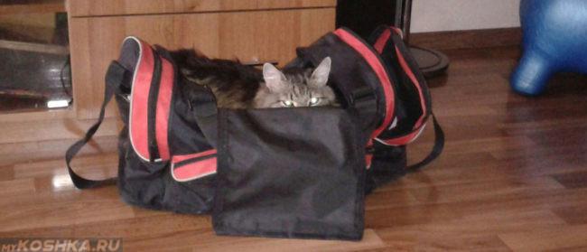 Убежище беременной кошки в виде сумки