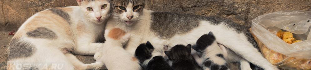 Кормящая кошка котята и кот
