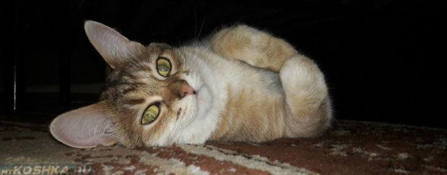 Кошка лежит на полу под диваном