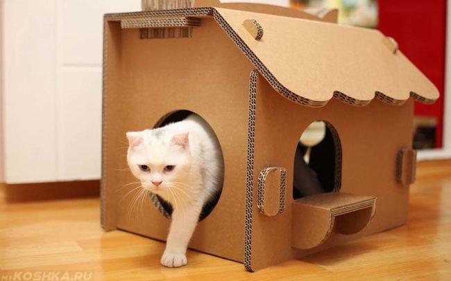 Беременная кошка в своём домике-укрытии