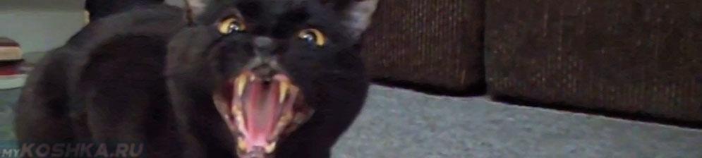 Кошка просит кота после вязки