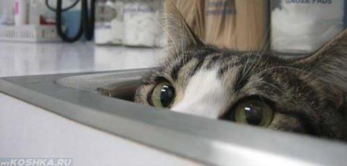 Кошка прячется в раковине