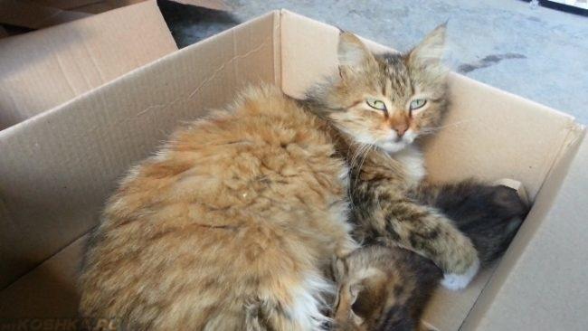 Кошка с котенком в коробке