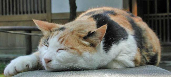 Беременная кошка спит на улице