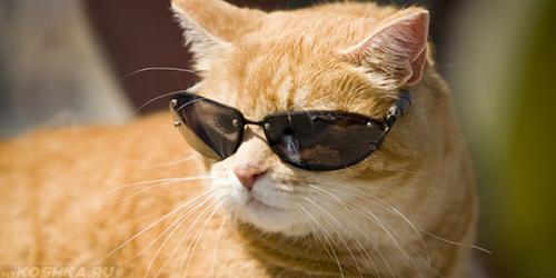 Рыжая спокойная кошка в очках