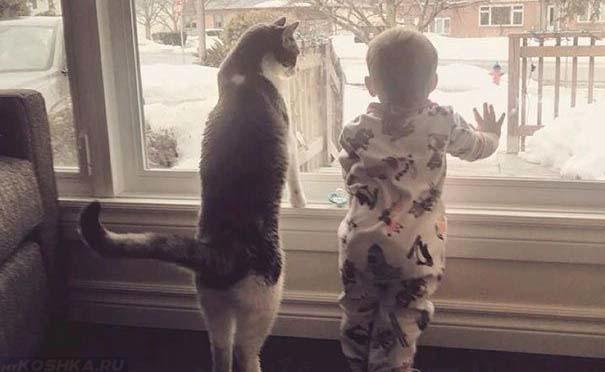 Кот и маленький ребёнок стоят у окна