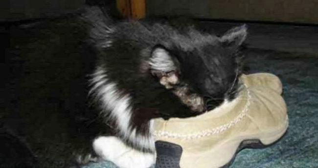 Кот обнюхивает обувь владельца