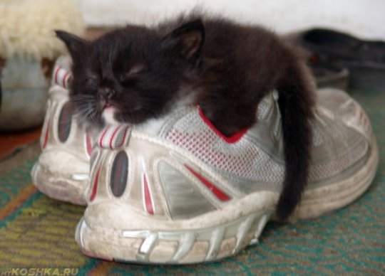 Котёнок спит на обуви