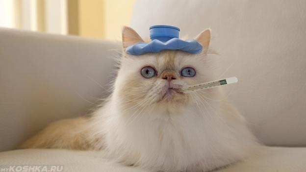 Кот болеет и лежит с градусником во рту