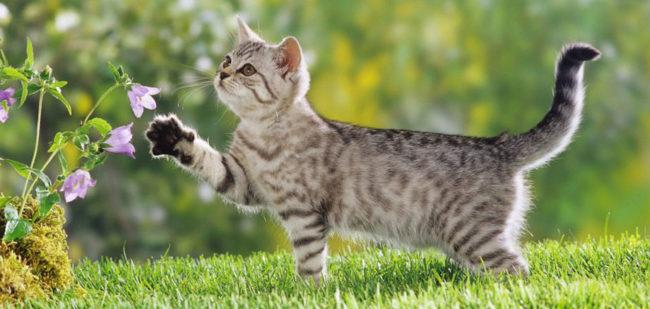 4 месячный котёнок на природе