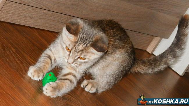Котёнок играет с шариком