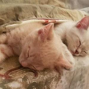 Маленькие котята спят под одеялком