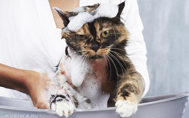 Купание кошки с противоблошиным шампунем в тазике